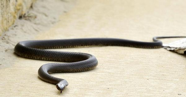 Ի՞նչ անել, երբ կծում է օձը․ Տարածեք, թող բոլորը իմանան