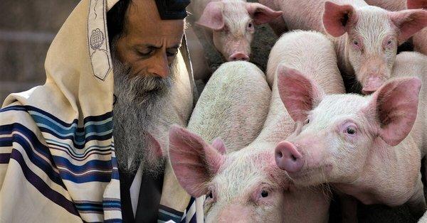Կզարմանաք, երբ իմանաք իրական պատճառը, թե ինչու մուսուլմաններն ու հրեաները խոզի միս չեն ուտում