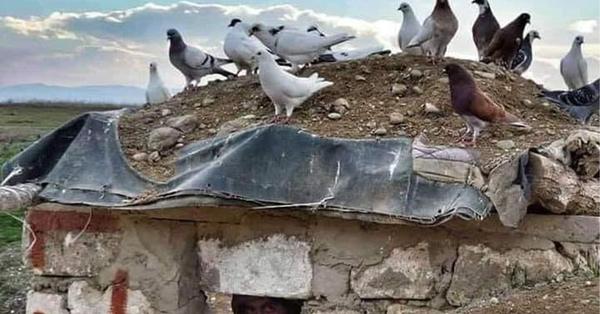 Հայկական դիրք է, որի վրա իջել են խաղաղության աղավնիներ