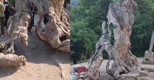 Երազանքների ծառը վերանորոգված է